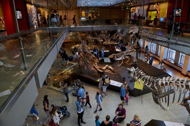 Looking down from the balcony into the expansive Dinosaur Hall