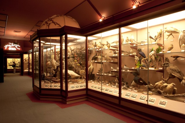 A large glass display case filled with hundreds of species of birds