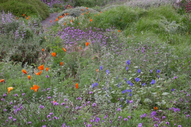 Native California wild flowers in a meadow