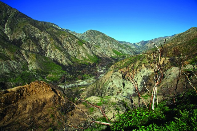 Green returning to the Angeles National Forest in Southern California six months after the Station Fire.