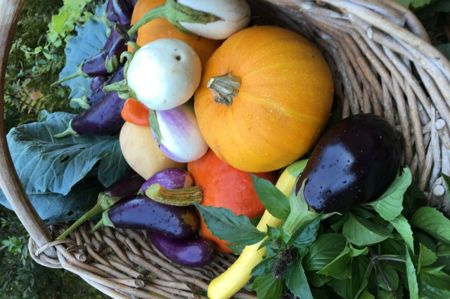 Recently harvested fall vegetables in a basket