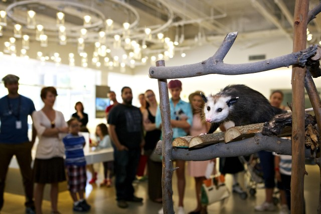An opossum makes an appearance in the Nature Lab