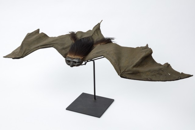 A prop bat from Dracula stretched out on a stand