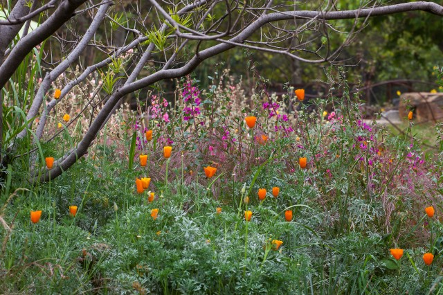 Pollinator Meadow - Native Plants