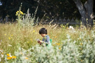 child in pollinator meadow
