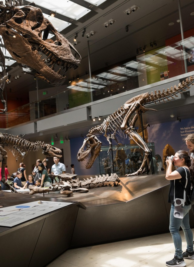 t-rex skeleton in dinosaur hall
