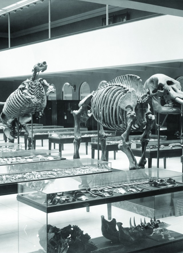 black and white image of mammal hall from old museum NHM