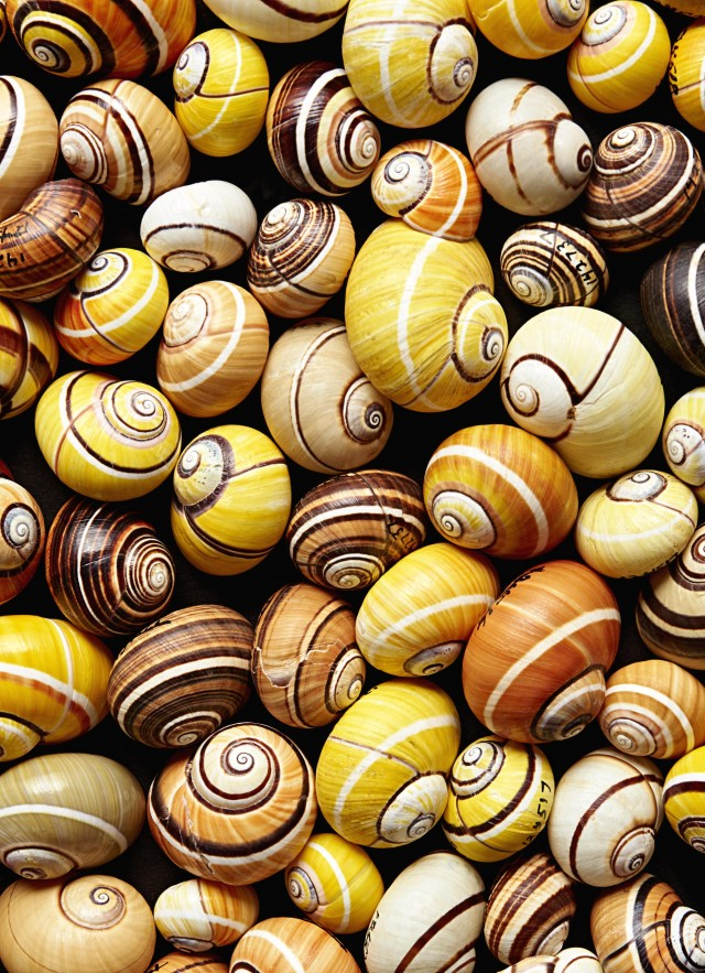 collection of shells malacology research and collections NHM