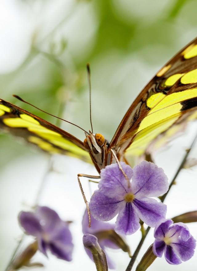 Butterfly Pavilion | nhm