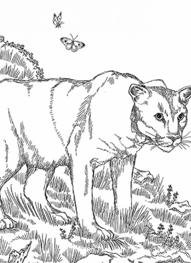 P-22 coloring pages inset image