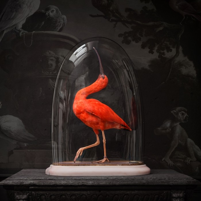 Stuffed: A Documentary on the Art of Taxidermy