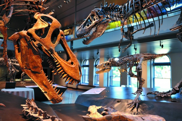 Photograph of the Dino Hall exhibit