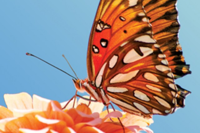module image for butterfly pavilion