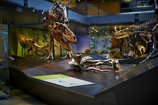 Photo of Dinosaur Hall