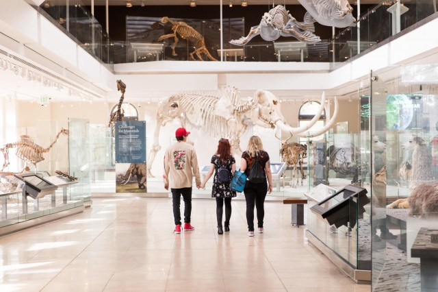 Three people look at mastodon skeleton in Age of Mammals