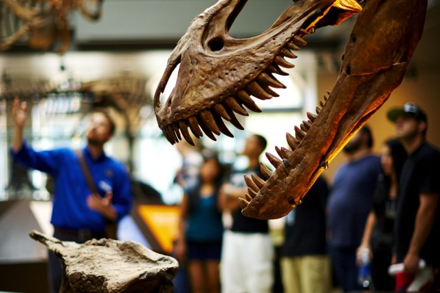 guests behind t.rex exhibit in dinosaur hall