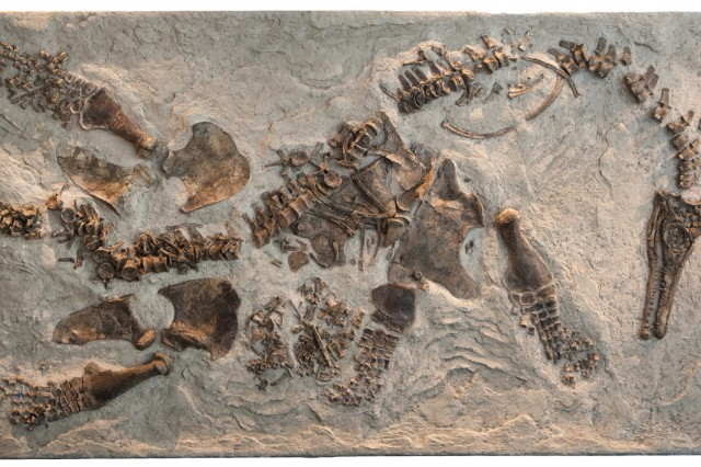 Fossil - Paleontology up close