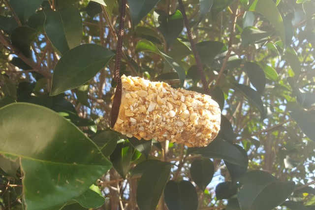 Image of complete DIY bird feeder in a tree.