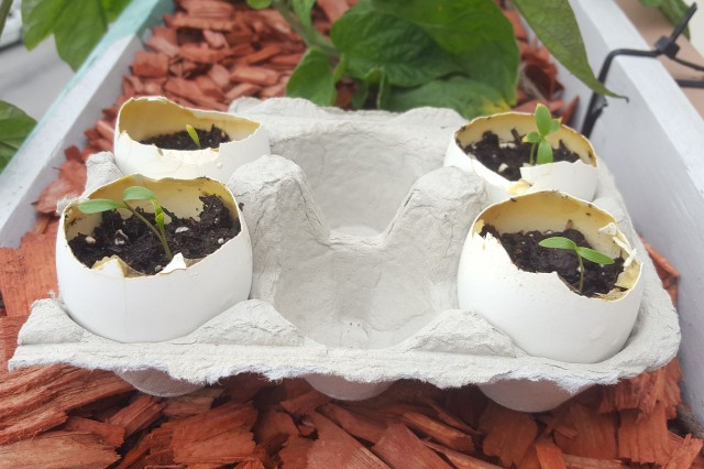 Image of eggshell herb garden activity.