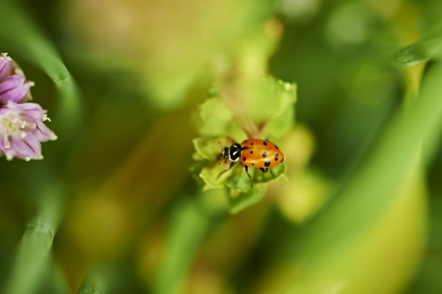 Image of ladybug resting on a plant