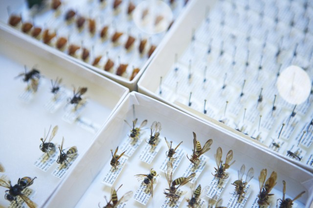 Insects specimens pinned in white boxes