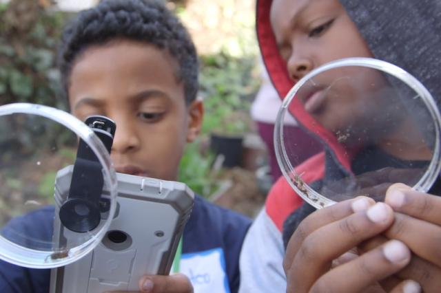 Two kids hold up petri dishes. One kid uses a cell phone to take a photograph of an insect inside of the petri dish.