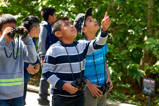 Group of boys with binoculars on a nature walk pointing up