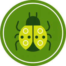 Icon of a ladybug to represent bugs