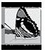 California Naturalist logo