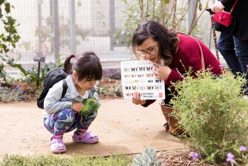 Little girl and adult using a guide and looking at a butterfly on the ground