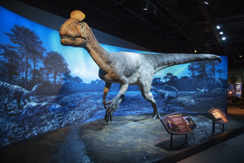 museum installation of full-sized cryolophosaurus replica