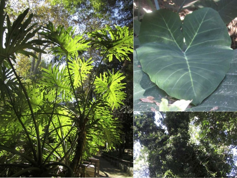 Some exotic plants along Ferndell trail.
