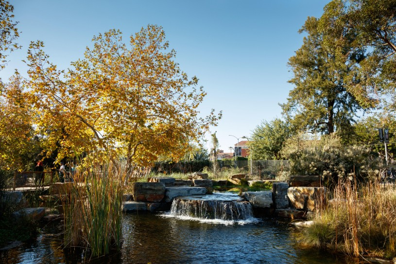 pond and waterfall in nature gardens