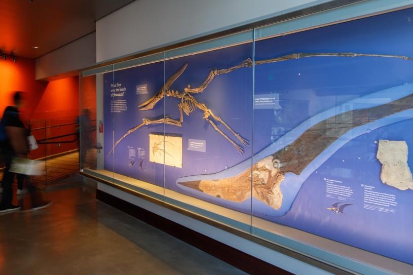 mounted pterosaur exhibit in dinosaur hall