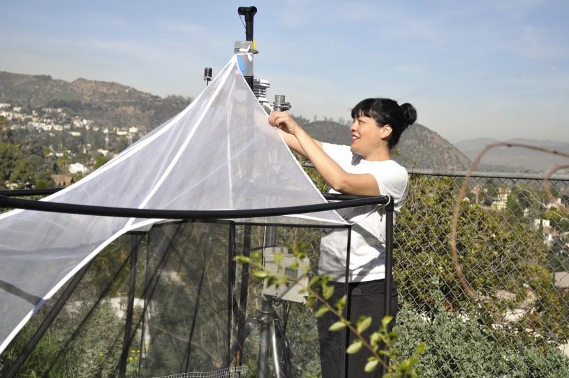 lisa gonzalez with malaise trap in LA bioscan community science