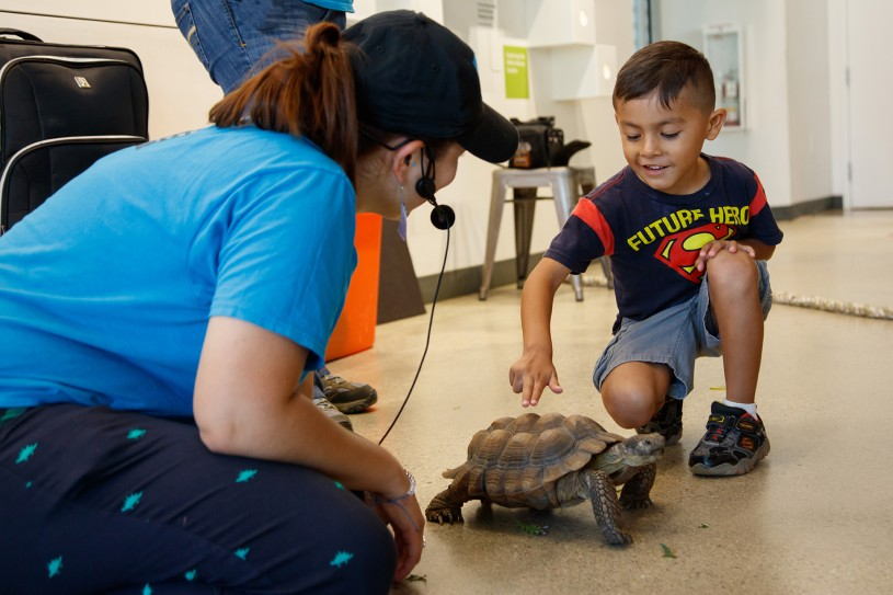 gallery interpreter with child and tortoise in nature lab meet a live animal