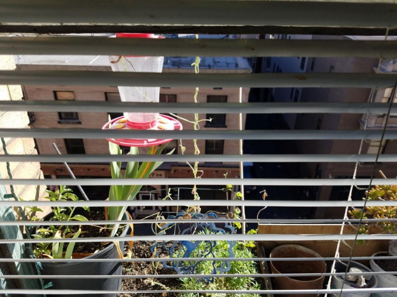 hummingbird feeder seen from inside an apartment window with the blinds halfway drawn