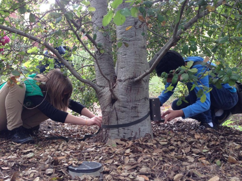 Nature Navigators practicing how to set up a camera trap in NHM Nature Gardens.