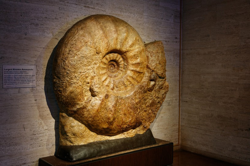 ammonite exhibit display