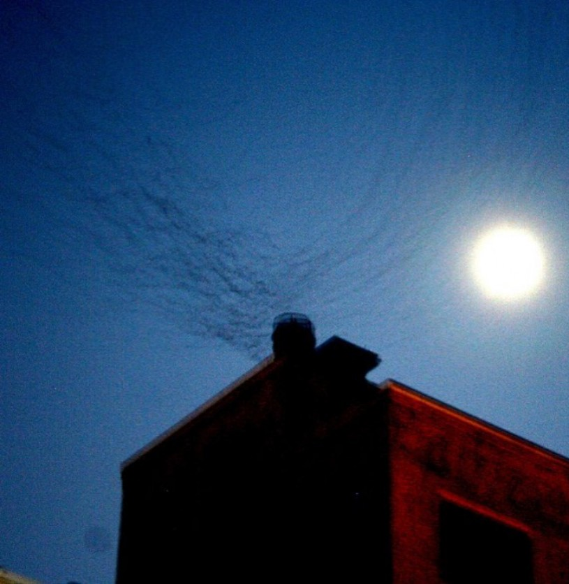 Vaux's Swifts using communal roosting site in Downtown Los Angeles, 2013. Photo: Jeff Chapman