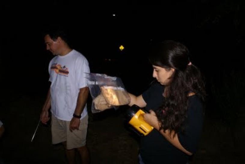 Community science, gecko, hunting, nighttime