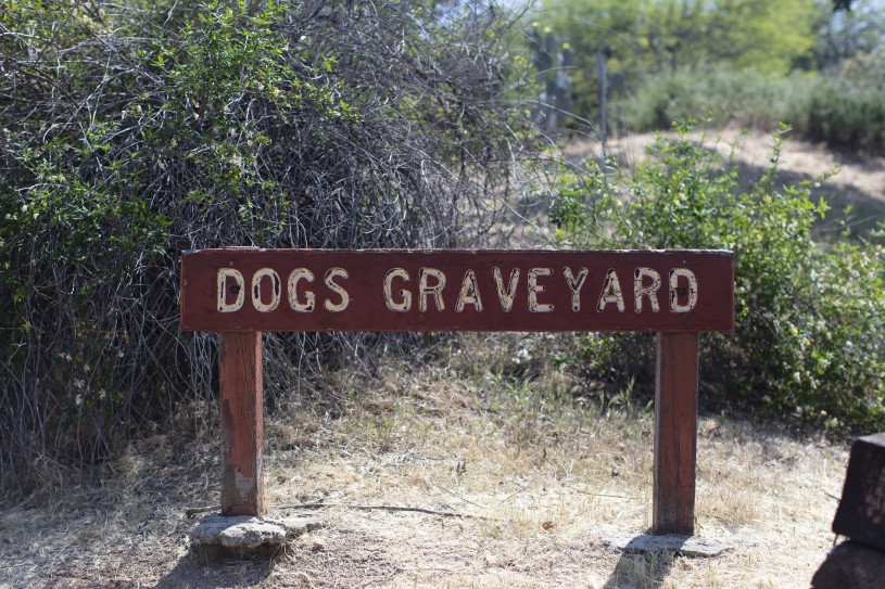 Dogs Graveyard at Hart Park