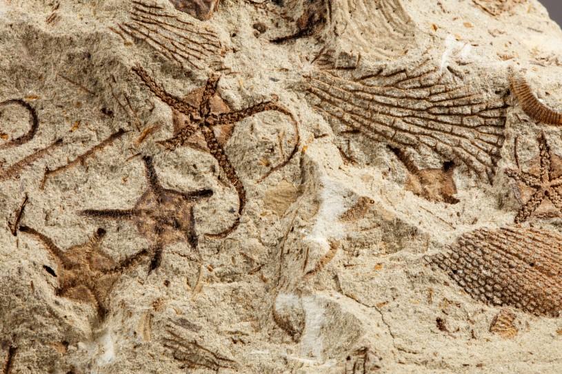 invertebrate paleontology trace fossils