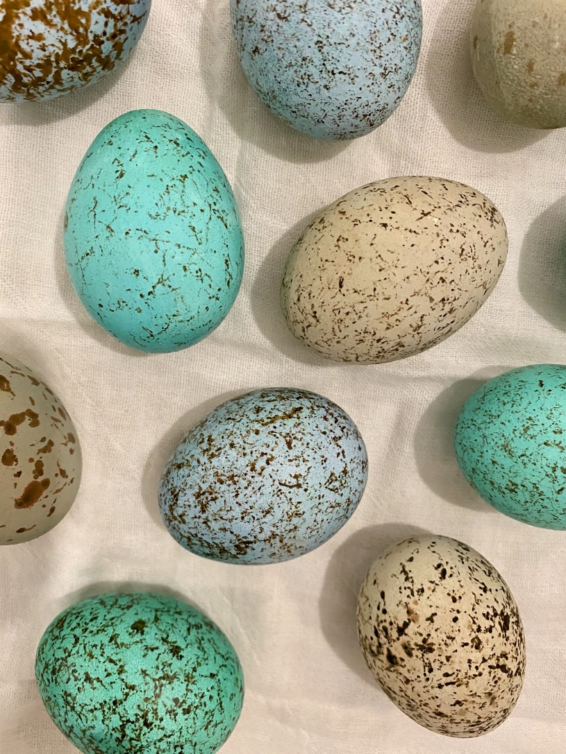 dyed and speckled eggs look like dino eggs