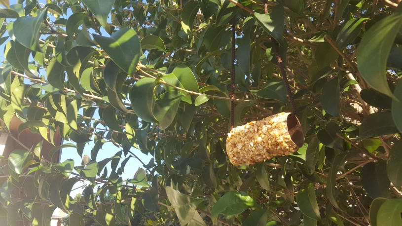 Image of bird feeder step 5 - hang bird feeder outside from a tree branch