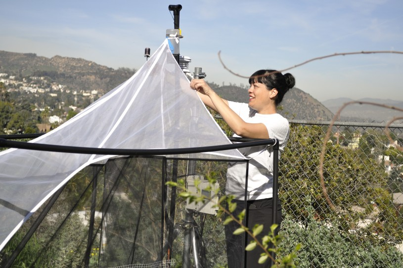 Hemos instalado trampas Malaise en sitios a lo largo de la Cuenca de Los Ángeles. Los anfitriones de los sitios monitorean las trampas y extraen los especímenes una vez al mes.
