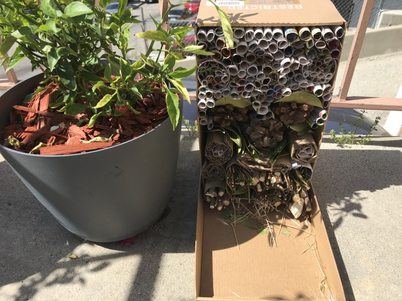 Bug Hotels step 7 - place bug hotel in a dry, sunny place in your garden or patio