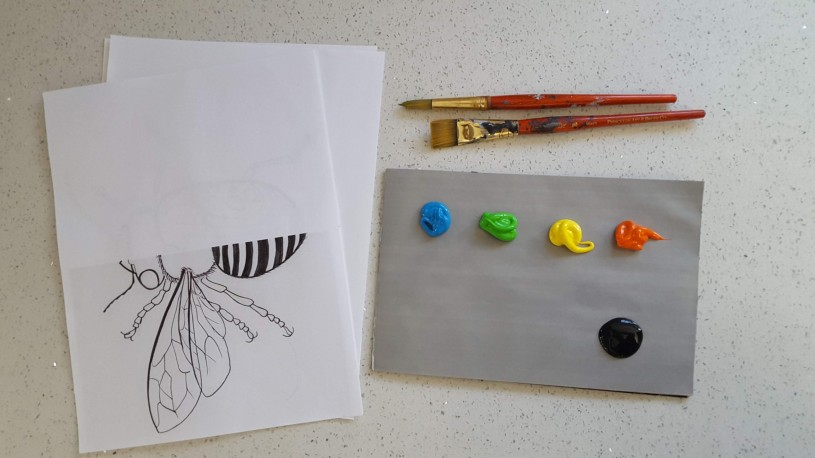 Insect Symmetry - materials for activity