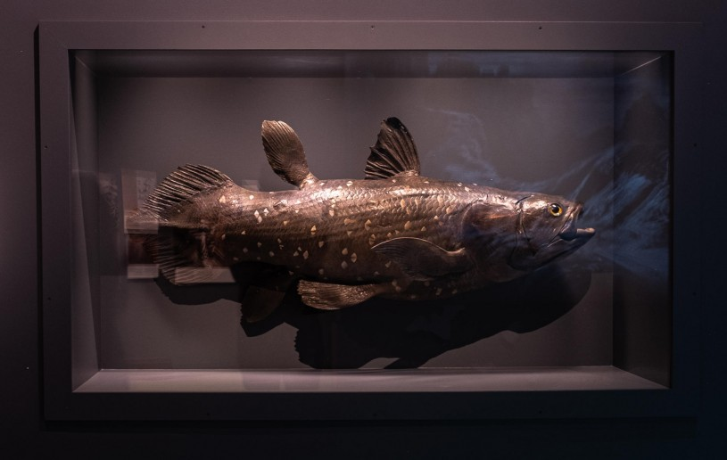 coelacanth natural history of horror