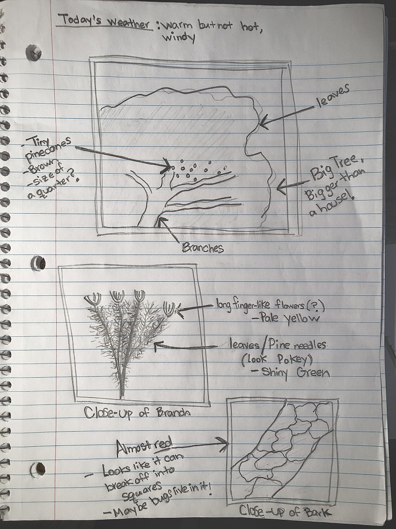 journal sketches of a plant with labels